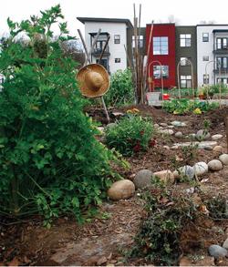 Freemont Garden