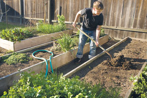 medium garden